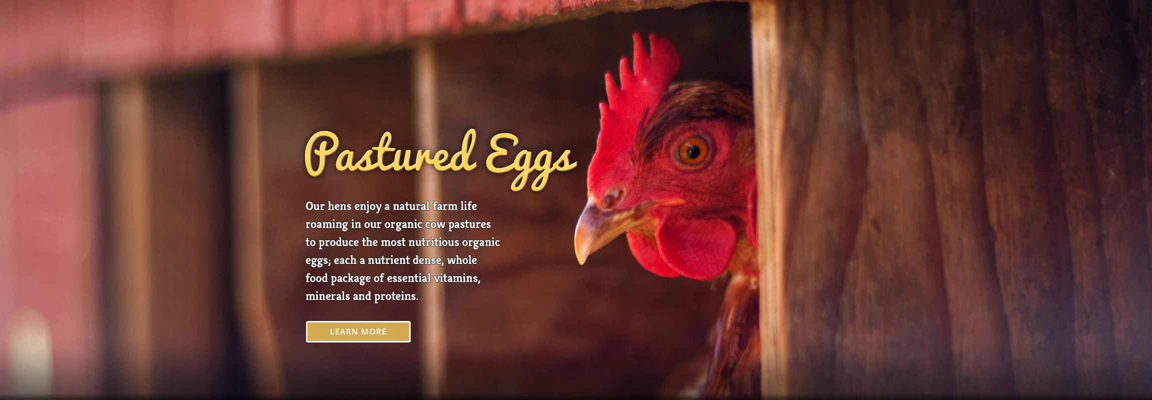 Alexandre EcoDairy Farms pastured eggs website header - Graphic Regime