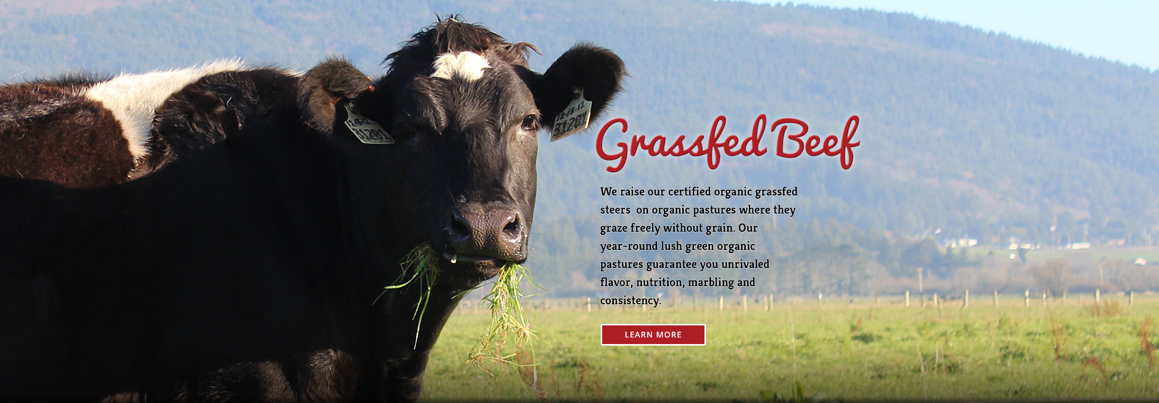 Alexandre EcoDairy Farms grassfed beef website header - Graphic Regime