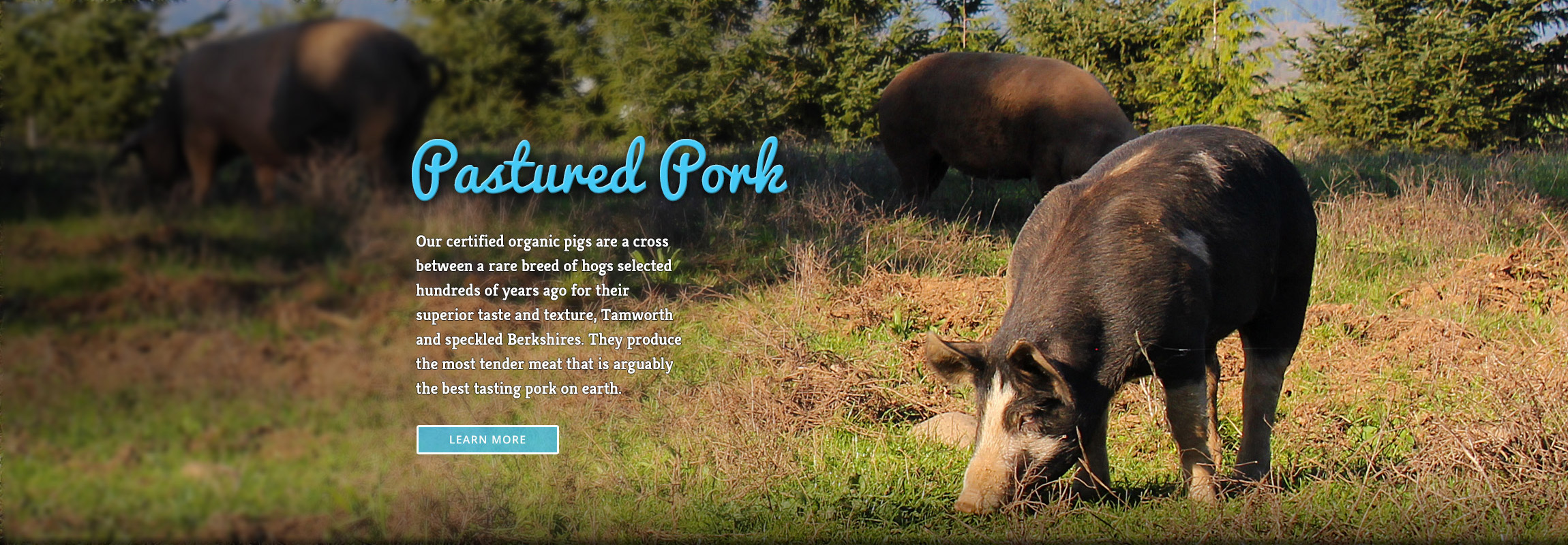 Alexandre EcoDairy Farms pastured pork website header - Graphic Regime